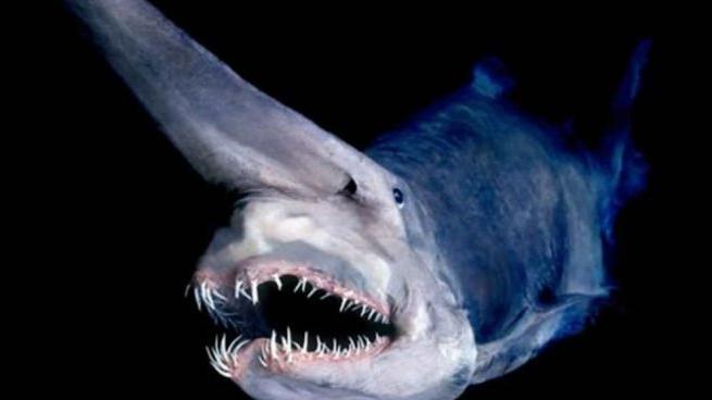 El Tiburón Duende y su peculiar aspecto